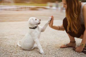 Несколько вопросов о выборе собаки